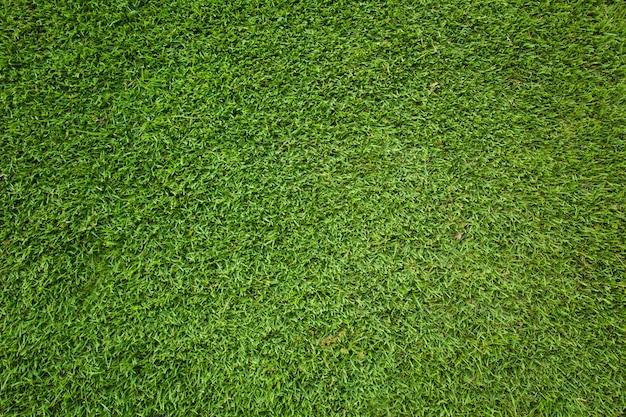 Grüner grashintergrund und textur