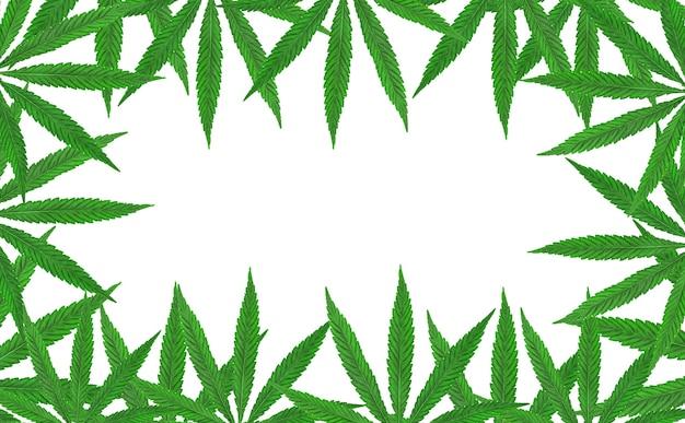 Grüner hanf, ganjablatt auf weißem lokalisiertem hintergrund. cannabisblätter, marihuana. ansicht von oben, fototapete nahaufnahme