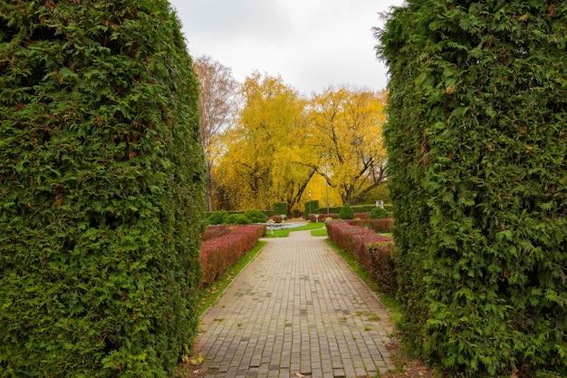 Grüner herbstrasen in einem stadtpark. landschaft.