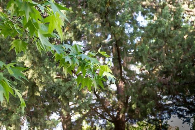 Grüner hintergrund abstrato vegetation im sommer unscharf