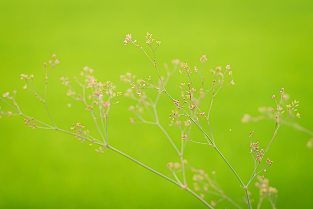 Grüner hintergrund durch das frische wilde gras.