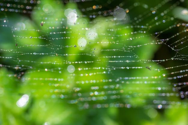 Grüner hintergrund mit morgenfrühling oder sommertau auf einem spinnennetz