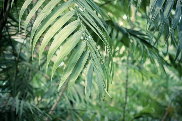 Grüner hintergrund von tropischen palmblättern