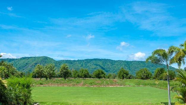 Grüner hinterhof mit berg und blauem himmel