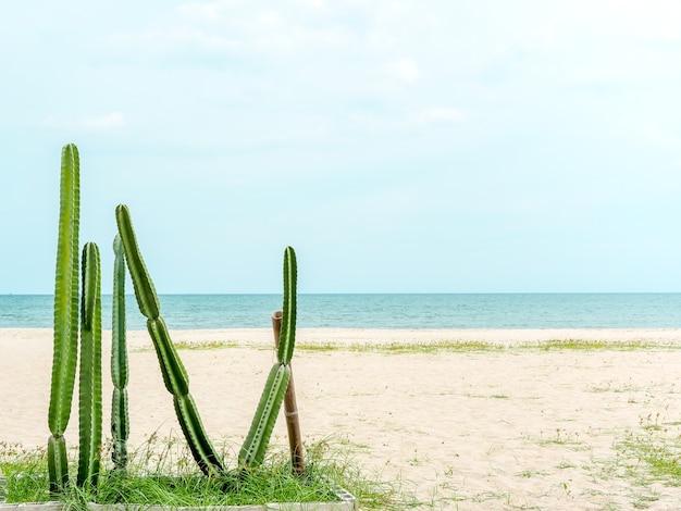 Grüner kaktus am strand auf sand und blauem himmel mit kopienraum