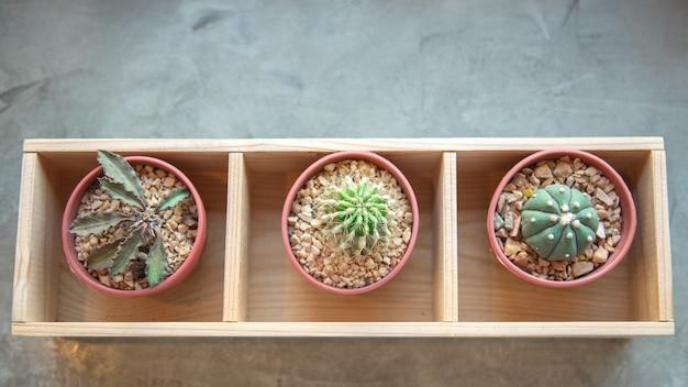 Grüner kaktus auf dem fensterbrett. draufsicht
