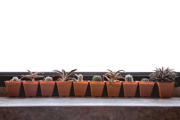 Grüner kaktus auf dem fensterbrett mit weißem hintergrund.