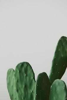 Grüner kaktus auf grauem hintergrund