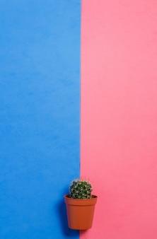 Grüner kaktus im topf auf rosa und blauem pastellfarbhintergrund
