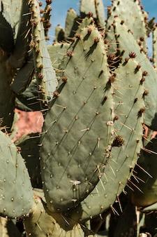 Grüner kaktus, reise in der wüste, exotische pflanze