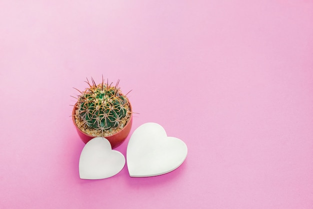 Grüner kaktus und hölzerne herzen auf rosa pastellhintergrund.