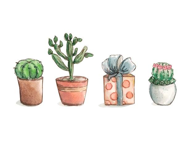 Grüner kaktus und illustrationszeichnung des geschenks in folge