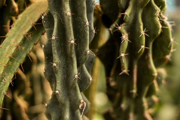 Grüner kaktushintergrund