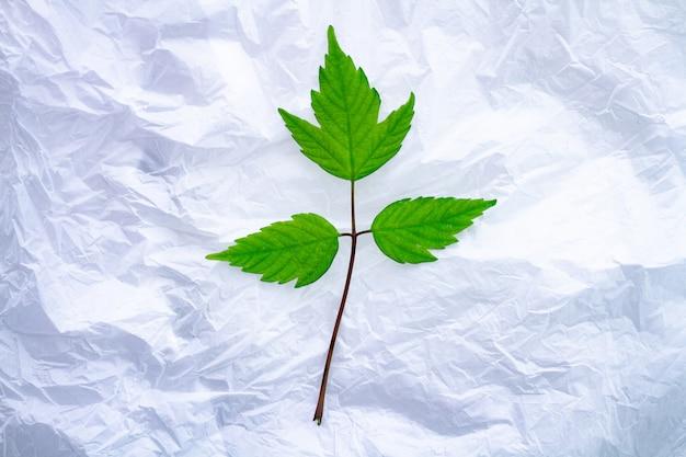Grüner kleiner zweig auf weißem polyethylenbeutel. schutz der natur und der ökologie vor verschmutzung von kunststoffprodukten. ökologische probleme und ökologische betreuung