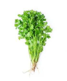 Grüner koriander lässt nahaufnahme