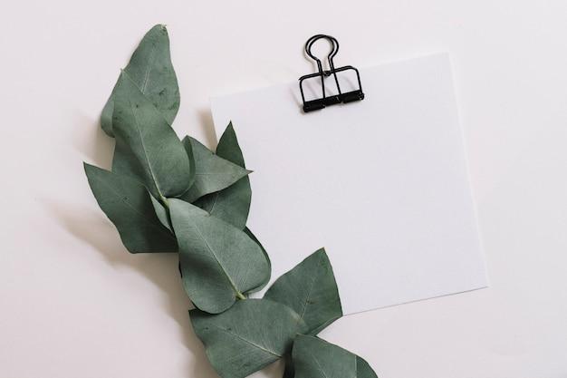 Grüner lassen zweig mit papieranhang mit bulldoggenclip auf weißem hintergrund