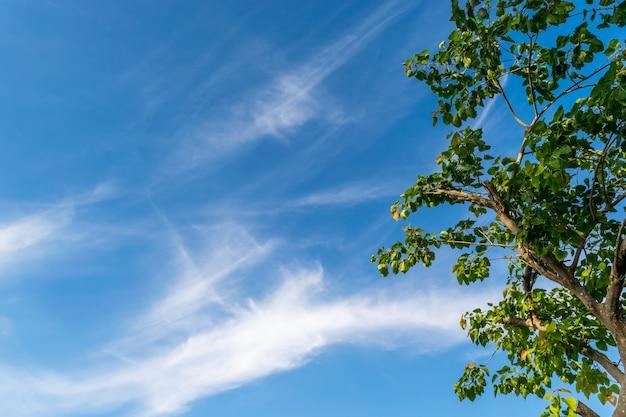 Grüner laubbaum auf blauem und bewölktem himmel