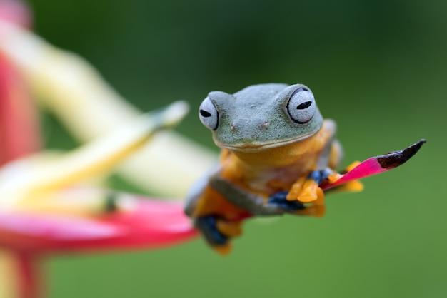Grüner laubfrosch thront auf einem blütenblatt
