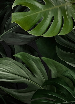 Grüner monster-naturhintergrund
