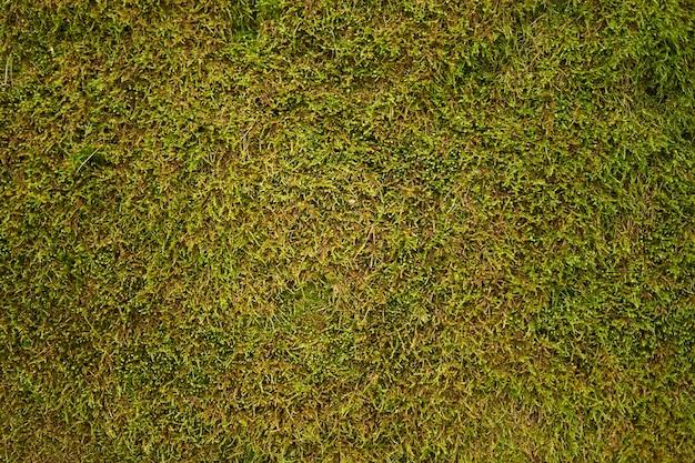 Grüner mooshintergrund