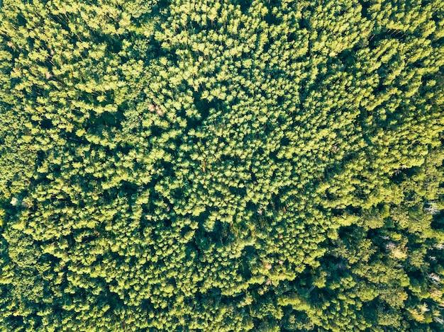 Grüner natürlicher hintergrund des laubwaldes an einem sonnigen tag. luftaufnahme von der drohne