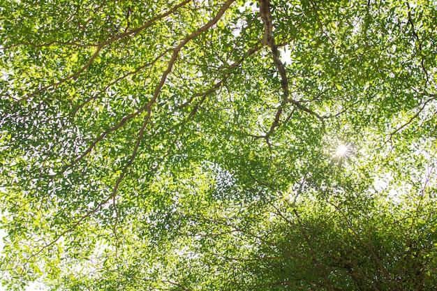 Grüner naturblatt-beschaffenheitshintergrund