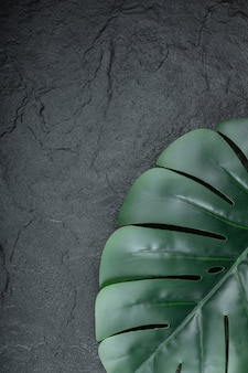 Grüner naturbrunch des blattes auf schwarz.