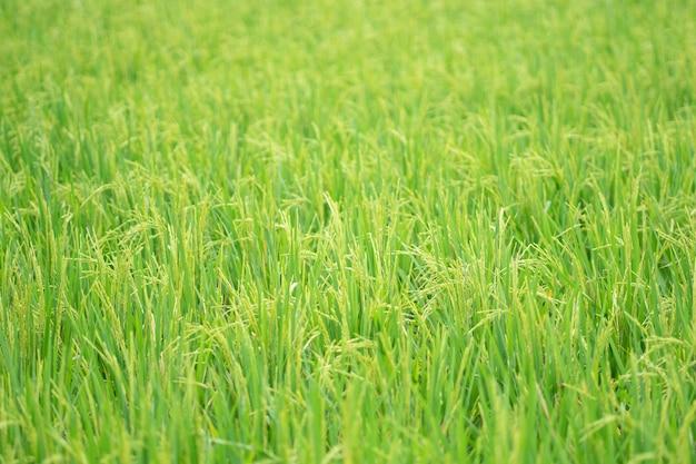 Grüner naturgrashintergrund