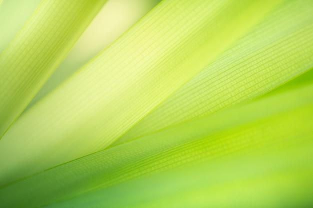 Grüner naturhintergrund. grüne blattbeschaffenheit der nahaufnahme für natürliches und frische-tapetenkonzept