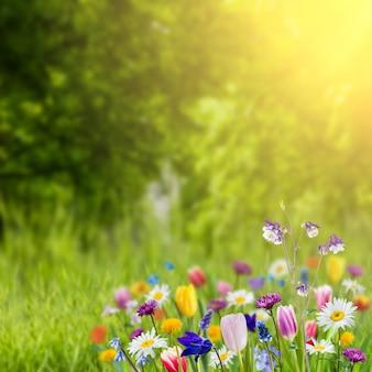 Grüner naturhintergrund mit wilden blumen im gras