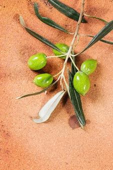 Grüner olivenzweig
