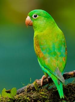 Grüner papagei auf defocused hintergrund