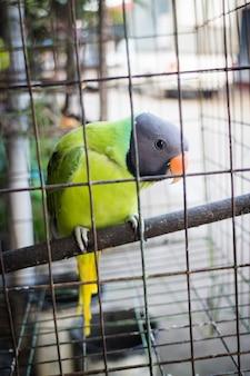 Grüner papagei im käfig