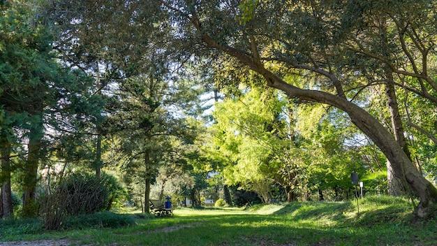 Grüner park. botanischer garten in suchum, abchasien.