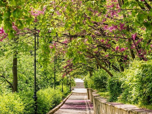 Grüner park der gasse im frühjahr