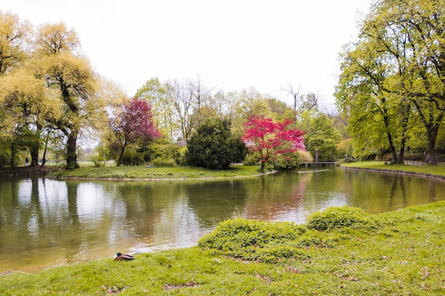 Grüner park mit üppigen bäumen
