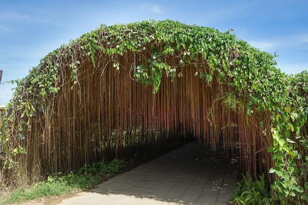 Grüner pflanzentunnel mit luftwurzeln und blauem himmel