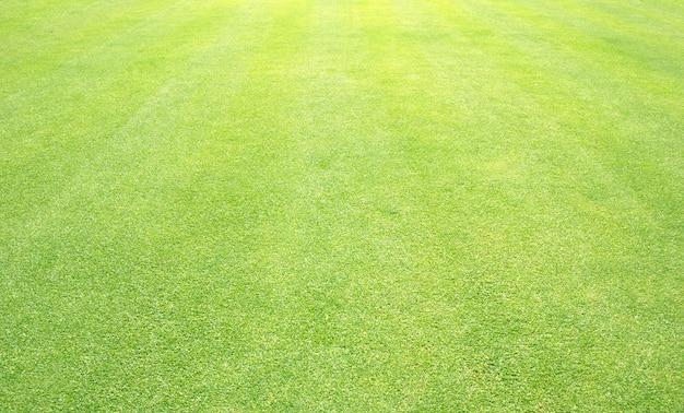 Grüner rasen der grashintergrund golfplätze