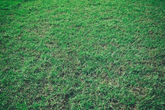 Grüner rasen leeren hintergrund.