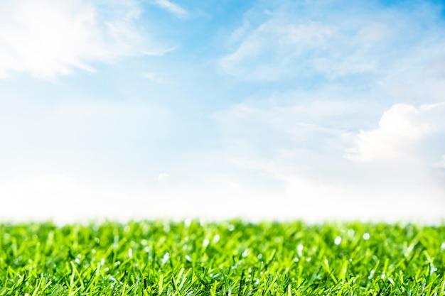 Grüner rasen mit blauem himmel. frühlingslandschaft am sonnigen tag.