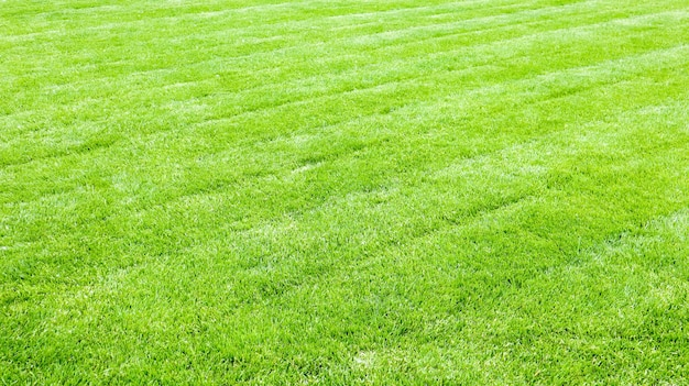 Grüner rasenhintergrund. ein frisch gemähter rasen mit spuren eines rasenmähers. schön beschnittener hof mit grünem gras.
