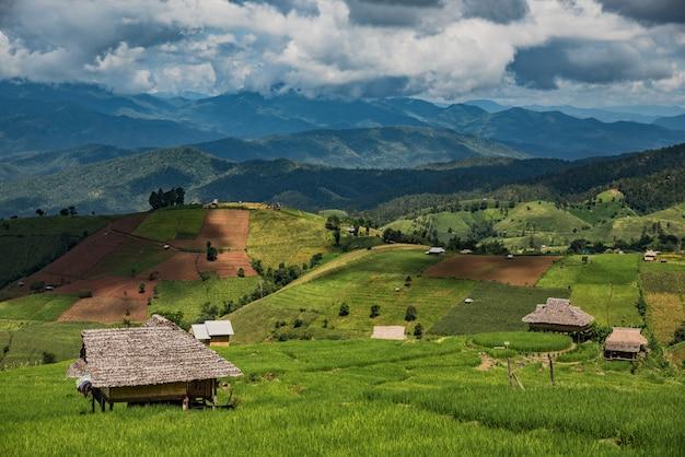 Grüner reis während und häuschenunterkunft die regenzeit bei thailand
