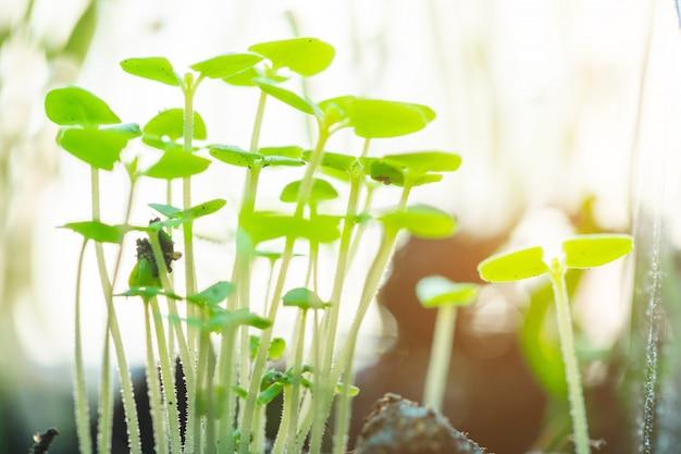 Grüner sämling, der aus boden heraus wächst