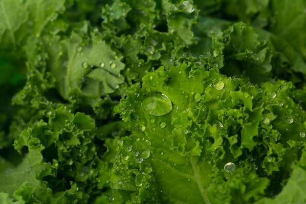 Grüner salat in einer glasschüssel