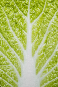 Grüner salat nahaufnahme hintergrund