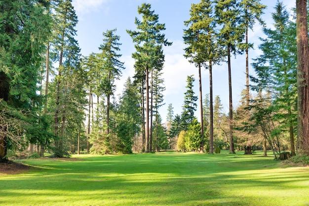 Grüner sonniger park mit großen bäumen, rasen und strahlender sonne