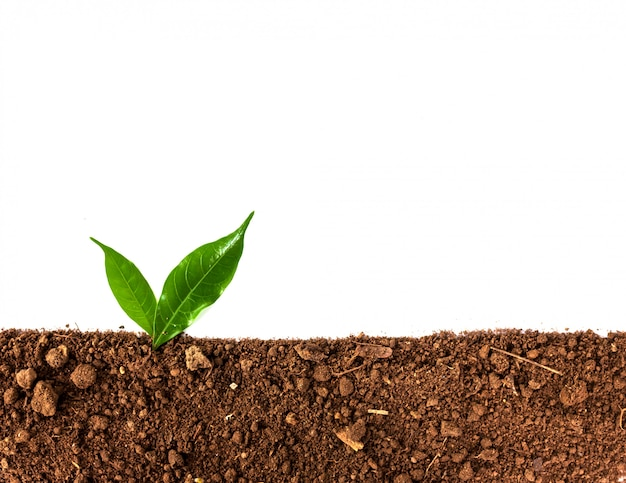 Grüner sprössling, der heraus vom boden getrennt wächst