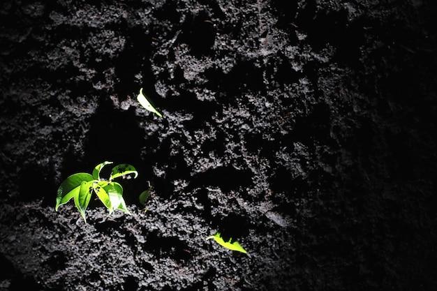 Grüner spross auf dem boden. frühlingskonzept. sämlinge im boden. die natur zu aktualisieren ist eine idee. hände pflanzen einen sprössling in den boden.