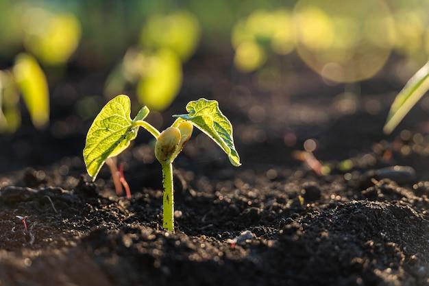 Grüner spross, der aus dem boden wächst, neues leben oder start oder beginn des umweltkonzepts
