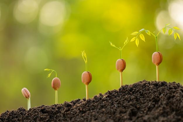 Grüner spross, der im boden mit sonnenlicht im freien und grünem unschärfehintergrund wächst